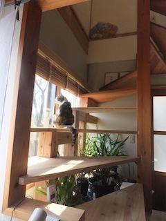 150403階段.jpg